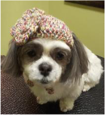 Doggie crocheted hats