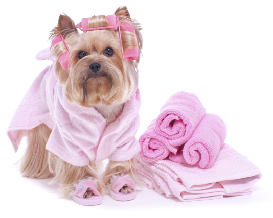 Schedule a dog grooming appointment today!